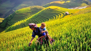 Explore Mu Cang Chai Terrace Fields