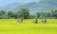 Explore the beauty of Mai Chau and Pu Luong
